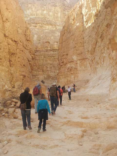 Wardit canyon, Paran desert